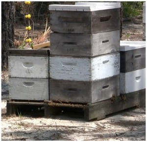 Several of Barrettt's beehives. Lori Ceier/WaltonOutdoors.com