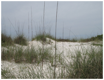 A walk between the sand dunes brings you to the Gulf of Mexico.