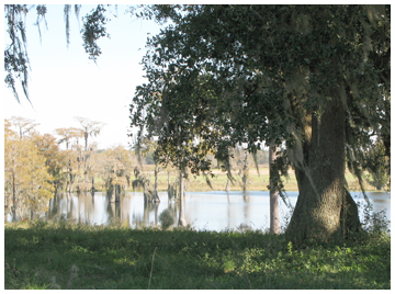 A pond view at Cypress Cattle Company.