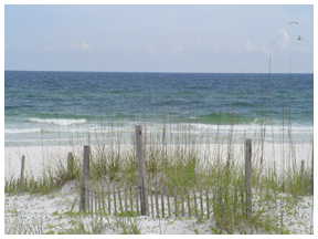Sand fencing, sea oats and sand dunes with Gulf of Mexico at Henderson Beach. Photo courtesy DEP