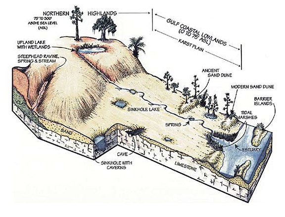 Karst diagram courtesy Florida Geological Survey.