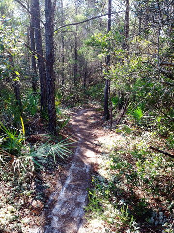 """We've trimmed low hanging branches and brush that had grown over the trail. The trail surface has also been grubbed and raked"" said Joe Godbee. Photo courtesy Pine Trail Mountain Bikers"