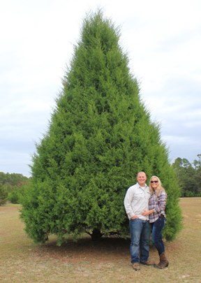 Christmas Tree Farm Arizona
