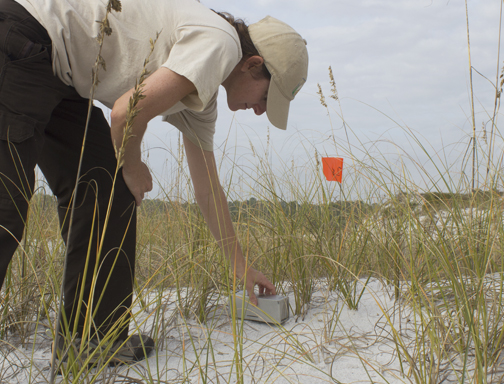 USFWS ecologist Kristi Yanchis sets a trap along the dune at Topsail Hill Preserve State Park. Lori Ceier/Walton Outdoors
