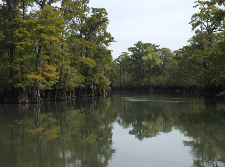 A hint of color change in the cypress trees indicates fall has arrived along the Choctawhatchee River and Holmes Creek. Lori Ceier/Walton Outdoors
