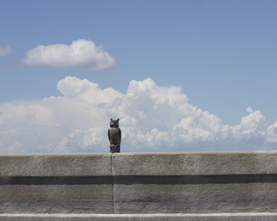 A giant owl decoy helps save roosting birds demise on the 331 bridge. Lori Ceier/Walton Outdoors