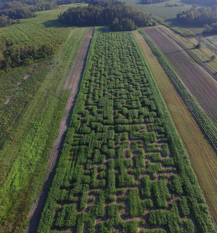 A six-acre corn maze awaits at Cypress Cattle and Produce Farm. Photo courtesy Fred Provost.