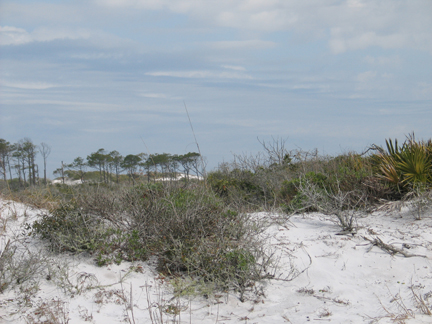 Mother Nature has sculpted the beautiful sand dunes at Topsail Hill State Preserve.