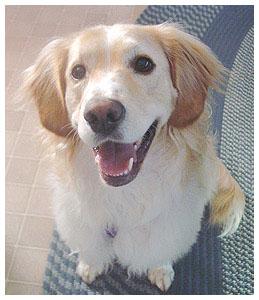 obedientdog