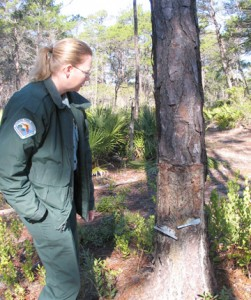 Leda Suydan, Park Service Specialist at Topsail Hill Preserve explains the cat face used to dip sap from pine trees. Lori Ceier/Walton Outdoors