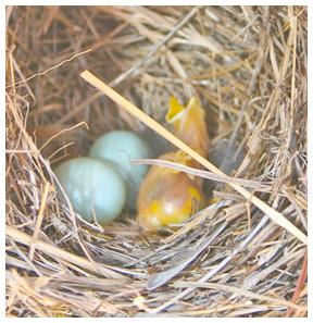 bluebirdchick1