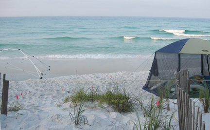 A South Walton Turtle Watch volunteer marked off with flags where loggerhead turtle attempted to nest.