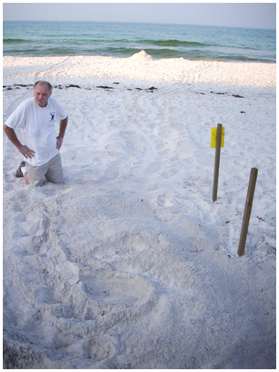Nest No. 14 was found by Al June 21, a loggerhead, green street in Sand Cliffs in Sea Crest Happy Fathers Day