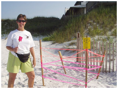 Nest. #16, loggerhead found by Debbie June 23. This is her first year walking as a volunteer. This nest was left in place and was in Gulf Trace near Grayton Beach State Park.