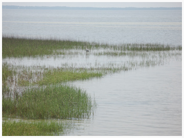 St. Joesph Bay a perfect habitat for birds, turtles and scallops.