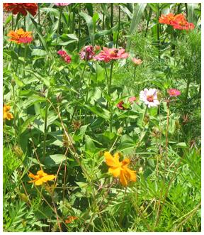 Flowers border the community garden in De Funiak Springs.