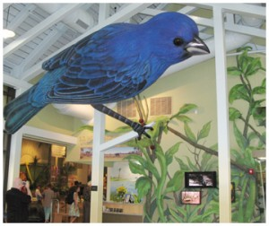 Indigo bunting towers over the entrance to the exhibition hall at the E.O. Wilson Biophilia Center.