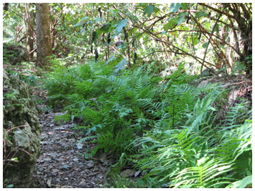 Take a walk along a fern lined trail.