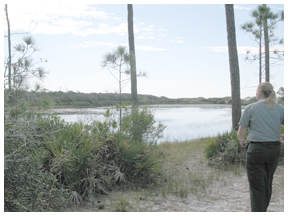 Led Suydan, park service specialist at Topsail Hill Preserve State Park looks for the resident alligator that resides on a coastal dune lake.