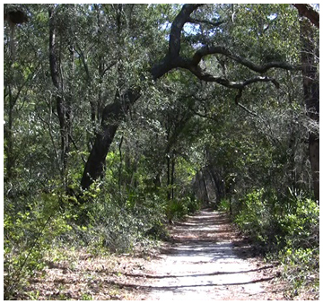 The north trail is located across the street from the Grayton Beach State Park entrance. Suited for bikes this trail is approx. 4 miles long.