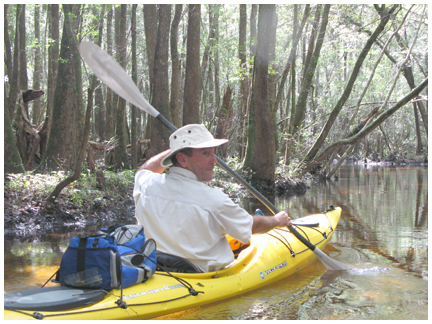Explore some of the many creeks and tributaries in a kayak with Into The Wild Eco Diversions.