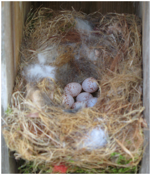 Springtime Boasts New Life In Chickadee Nest Walton Outdoors