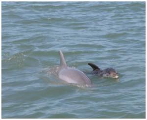 dolphinsmall