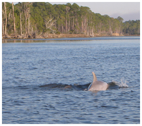 Tracking Dolphins For Science On Choctawhatchee Bay