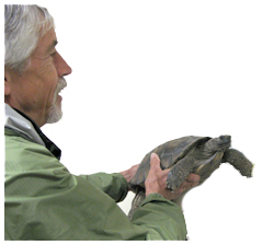 turtlebob