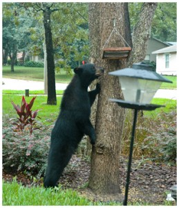 Removing feeders from your yard can help in detering black bears. Photo courtesy Melissa Wilder.