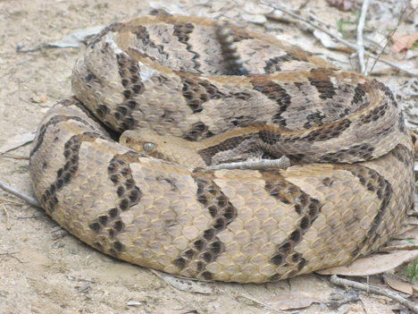 Snakes Are Plentiful This Spring In The Florida Panhandle