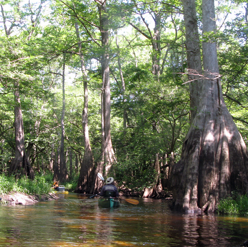 Seven Runs Creek is one of the most scenic creeks in Walton County. Lori Ceier/Walton Outdoors