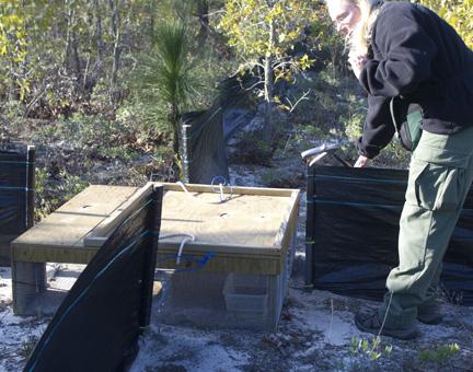 Wildlife biologist Charlene Hopkins prepares to check trap in Point Washington State Forest. Lori Ceier/Walton Outdoors