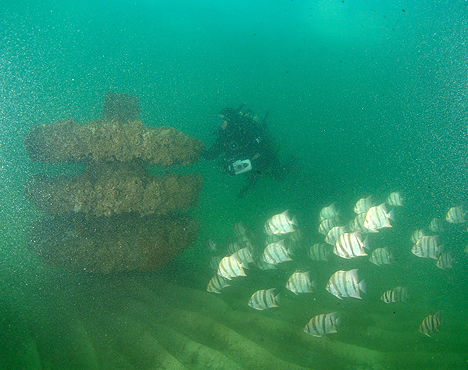 The Future Looks Bright For Artificial Reefs In South