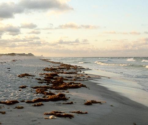 Beach wrack in South Walton. Lori Ceier/Walton Outdoors