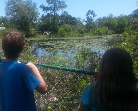 Destin Middle School students watch a great blue heron take off.