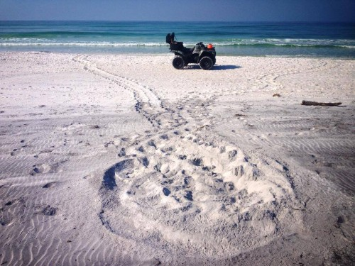 The first sea turtle nest of the 2014 season was laid May 21 at Topsail Hill Preserve State Park. Photo courtesy Jeff Talbert