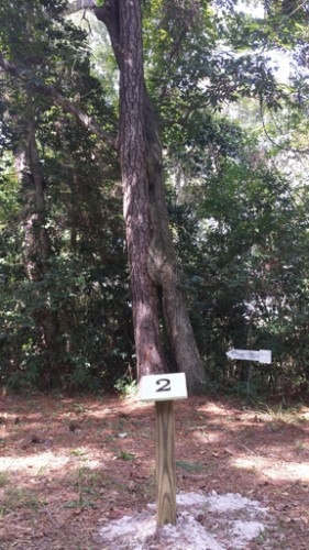 The Kissing Tree is one of the features along the Living Shoreline Trail.