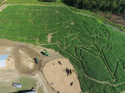 5.3 acres of corn maze fun in Bonifay. Photo courtesy Hammack Farms