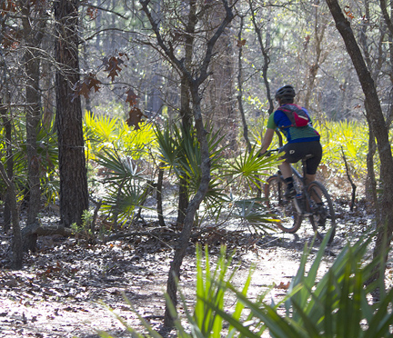 forestbicyclist