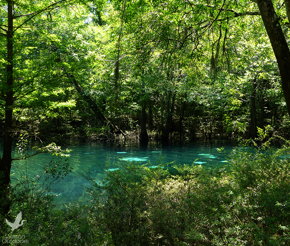 Stream bank restoration at Hightower Springs, Spurling and Live Oak Landing, along with restoration of Cotton Landing on Holmes Creek, along with Devil's Hole Spring on Econfina are a few of the projects Water Management will be working on.