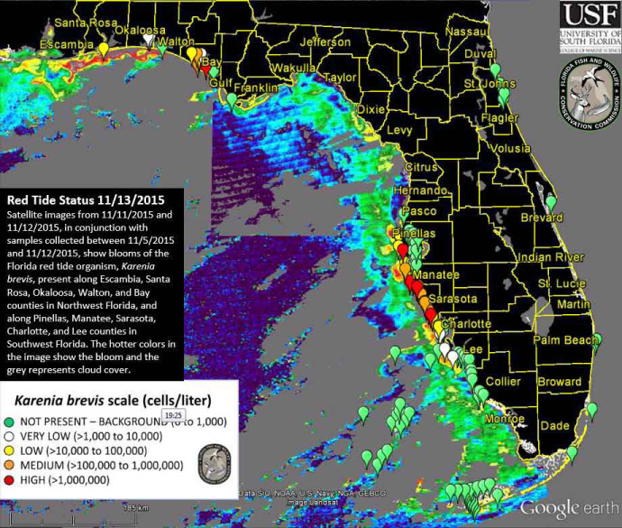 Red Tide Organism Are Currently Present Along Escambia Santa Rosa
