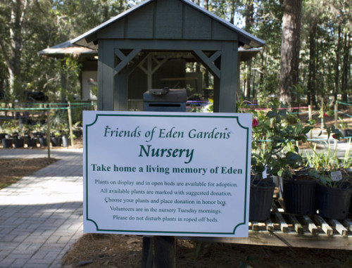 You can purchase by donation a camellia and other plants from Eden at the Friends nursery near the ranger station. Lori Ceier/Walton Outdoors
