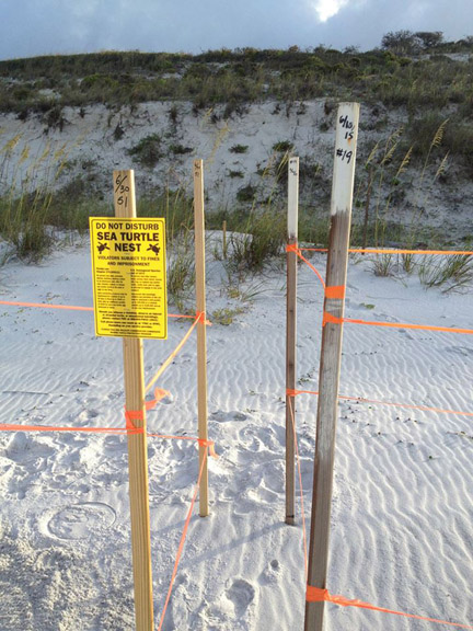 Turtlenestlocation.jpg – When a turtle nest is discovered, markers are set to help protect the nest. Photo courtesy South Walton Turtle Watch