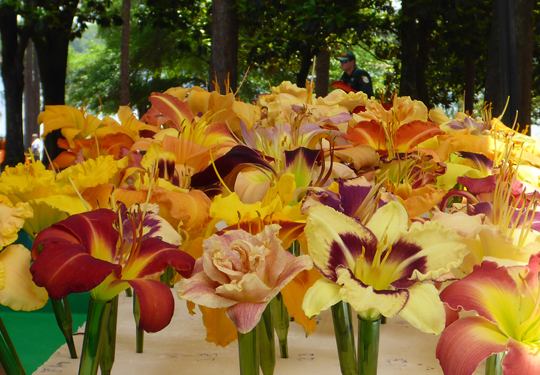 The Choctawhatchee Hemerocallis Society displays a variety of daylilies at LakeFest May 21, 2016.
