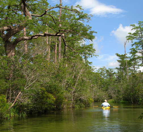 Clear water and cypress trees along Boiling Creek. Lori Ceier/Walton Outdoors