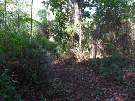 Overgrown trail at Kellogg Park. Lori Ceier/Walton Outdoors