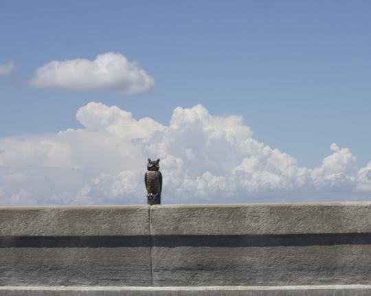 A giant owl decoy helps save roosting birds demise on the 331 bridge. Lori Ceier/Walton Outdoors