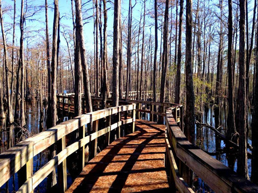 Boardwalk trail around pond. Photo courtesy Pine Log State Forest