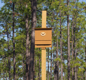 Six bat boxes were installed throughout the forest as part of an Eagle Scout project. Lori Ceier/Walton Outdoors